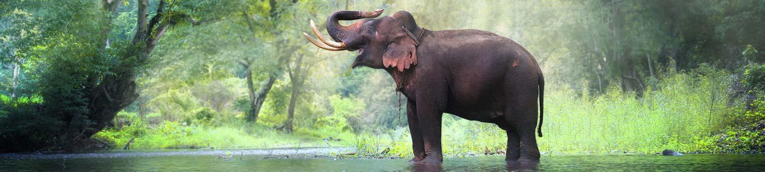 Far East Thailand 3