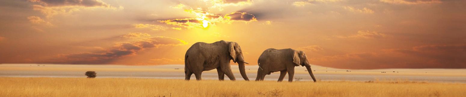 Luxury Travel Guru Safari